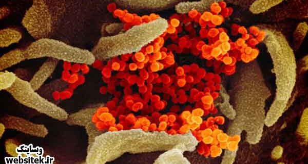 ابتلای ۳۵ مورد نو به ویروس کرونا در آمریکا